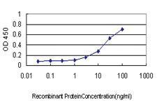Anti-CYTH1 Mouse Monoclonal Antibody