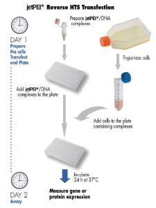 HTS-DNA-Transfektionsreagenz, jetPEI®