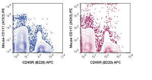 Anti-KIT Rat Monoclonal Antibody (PE (Phycoerythrin)) [clone: ACK2]