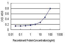 Anti-RASA3 Mouse Monoclonal Antibody