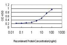 Anti-RRAS Mouse Monoclonal Antibody