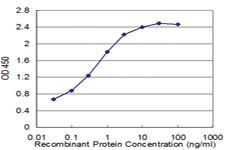 Anti-RXRG Mouse Monoclonal Antibody