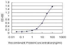 Anti-DSE Mouse Monoclonal Antibody