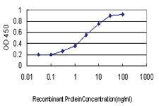 Anti-SERPINB3 Mouse Monoclonal Antibody