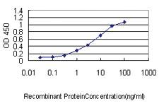 Anti-SH3BGRL Mouse Monoclonal Antibody