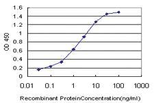 Anti-SIM2 Mouse Monoclonal Antibody