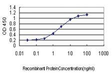 Anti-TNP1 Mouse Monoclonal Antibody