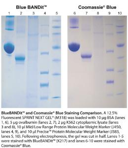 Proteinfärbereagenz, Blue BANDit™