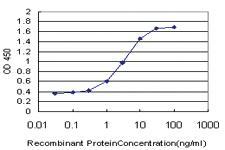 Anti-ARMCX1 Mouse Monoclonal Antibody