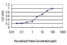 Anti-ATP6V1C2 Mouse Monoclonal Antibody