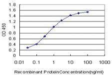 Anti-CXCR5 Mouse Monoclonal Antibody