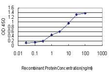 Anti-CANT1 Mouse Monoclonal Antibody