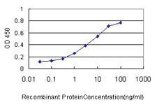 Anti-CASP1 Mouse Monoclonal Antibody