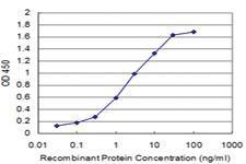 Anti-CHML Mouse Monoclonal Antibody