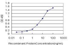 Anti-CLCA1 Mouse Monoclonal Antibody
