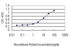 Anti-CNDP2 Mouse Monoclonal Antibody