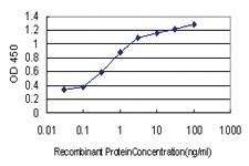 Anti-COMMD1 Mouse Monoclonal Antibody
