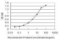 Anti-CUL7 Mouse Monoclonal Antibody