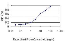 Anti-CX3CL1 Mouse Monoclonal Antibody
