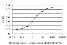 Anti-CYB5R4 Mouse Monoclonal Antibody