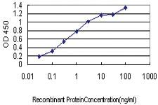 Anti-TXLNG2P Mouse Monoclonal Antibody