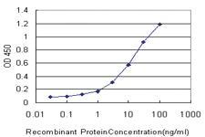 Anti-DEPTOR Mouse Monoclonal Antibody