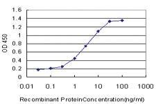 Anti-DLX5 Mouse Monoclonal Antibody