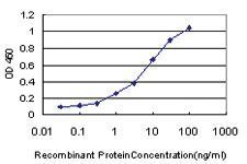 Anti-GPNMB Mouse Monoclonal Antibody
