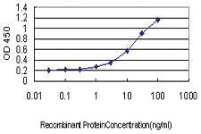 Anti-HAVCR1 Mouse Monoclonal Antibody