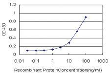 Anti-HMBS Mouse Monoclonal Antibody