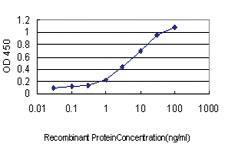 Anti-HORMAD1 Mouse Monoclonal Antibody