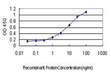 Anti-HOXB1 Mouse Monoclonal Antibody