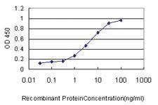 Anti-ICAM1 Mouse Monoclonal Antibody