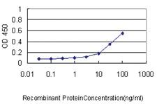 Anti-ISG20 Mouse Monoclonal Antibody