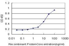 Anti-STT3A Mouse Monoclonal Antibody