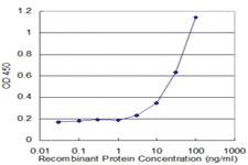 Anti-LCN1 Mouse Monoclonal Antibody