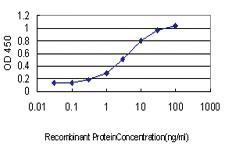 Anti-LGALS8 Mouse Monoclonal Antibody