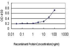 Anti-RXFP1 Mouse Monoclonal Antibody