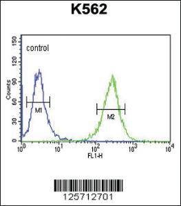Anti-B3GAT1 Rabbit Polyclonal Antibody