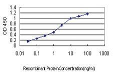 Anti-UBR1 Mouse Monoclonal Antibody