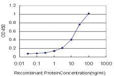 Anti-UGT2B10 Mouse Monoclonal Antibody