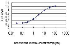 Anti-ZHX1 Mouse Monoclonal Antibody