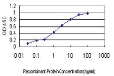 Anti-MPHOSPH6 Mouse Monoclonal Antibody