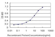 Anti-MYO3A Mouse Monoclonal Antibody