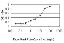 Anti-NCF4 Mouse Monoclonal Antibody