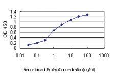 Anti-NCK1 Mouse Monoclonal Antibody