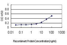 Anti-NFKBIB Mouse Monoclonal Antibody