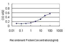 Anti-YBX1 Mouse Monoclonal Antibody