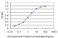 Anti-PASK Mouse Monoclonal Antibody