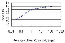 Anti-PDE1B Mouse Monoclonal Antibody